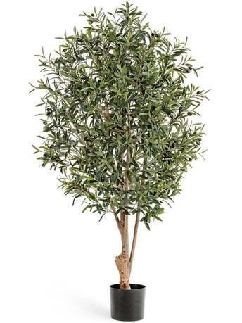 Олива Твист с плодами, 120 см, серо-зеленая