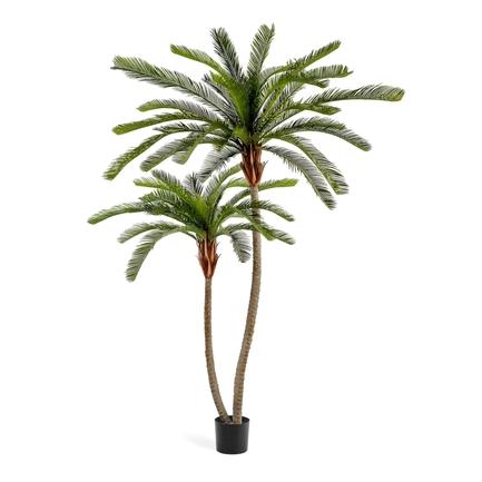 Пальма Цикас двухствольная, 230/250 см, сборная