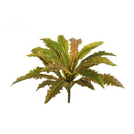 Асплениум Криспи Вэйв куст Sensitive Botanic, 20 листов, 40х35 см