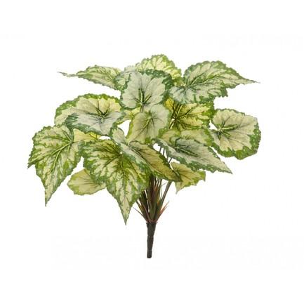 Бегония крупнолистная Sensitive Botanic, 35 см, светло-зеленая