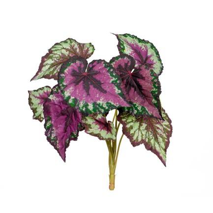 Бегония крупнолистная, 9 листьев, 37 см, зелено-бордовая
