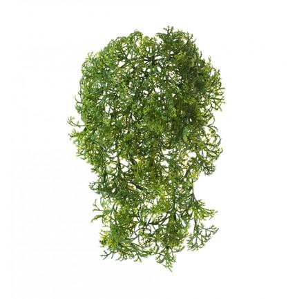 Ватер-грасс (Рясковый мох) куст, зеленый