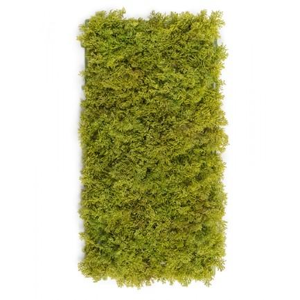 Мох Ягель коврик, 25х50 см, светло-зеленый микс 20.072028LG-M Treez