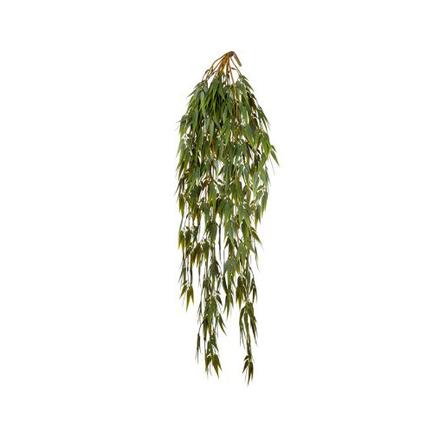 Бамбук ампельный, 60 см