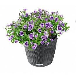 Цветы и сад