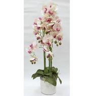 Dream Garden Декоративные цветы Орхидеи розовые в вазе, 28х28х90 см