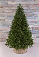 Triumph Tree Можжевельник, 215 см, зеленый