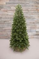 Triumph Tree Ель Уэльская, 120 см, зеленая