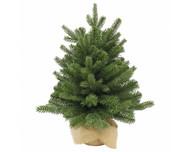 Triumph Tree Ель Шервуд Премиум в мешочке, 90 см, зеленая