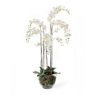 Treez Орхидея Фаленопсис, 5 ветвей в стеклянной вазе, 150 см, белая