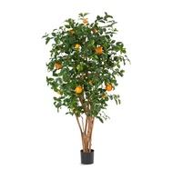 Treez Апельсиновое дерево с плодами, 180 см