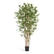 Бамбук Японский ориенталь, 180 см, зеленый