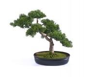 Treez Бонсай Сосна-мини в кашпо, 40 см, зеленый