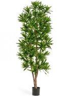 Treez Драцена Рефлекса, 180 см, зеленая
