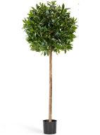 Treez Лавр круглый на стволе, 170х50 см, зеленый