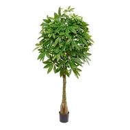 Treez Пахира на витом стволе (косичка), 165 см, зеленая