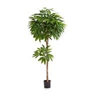 Treez Пахира, 180 см, зеленая