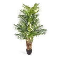 Treez Пальма Арека Бетель Sensitive Botanic, 5 стволов, 20 листов, 130 см