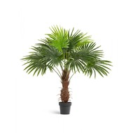 Treez Пальма Вашингтония Sensitive Botanic, 120 см, зеленая
