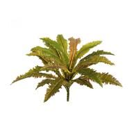 Treez Асплениум Криспи Вэйв куст Sensitive Botanic, 20 листов, 40х35 см
