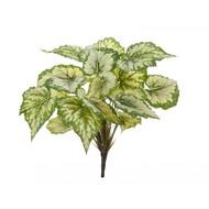 Treez Бегония крупнолистная Sensitive Botanic, 35 см, светло-зеленая