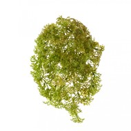 Treez Ватер-грасс (Рясковый мох) куст, светло-зеленый со светло-коричневым
