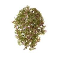 Treez Ватер-грасс (Рясковый мох) куст, зеленый с бордо