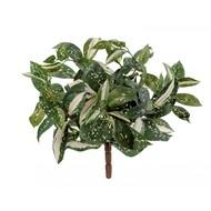 Treez Кордилина Тини куст MDP, 30 см