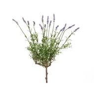 Treez Лаванда куст со светло-сиреневыми цветами, 53 см