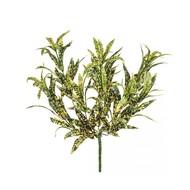 Treez Спайдер-аукуба куст, 30 см, желто-зеленый
