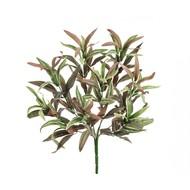 Treez Спайдер-драцена припыленный куст, 30 см, бело-зелено-розовый