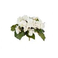 Treez Бегония куст, 15 см, белый