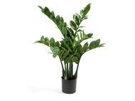 Treez Замиокулькас кустовой малый, 6 веток, 70 см
