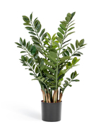 Treez Замиокулькас кустовой, 10 веток, 90 см