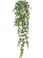 Treez Английский плющ Олд Тэмпл Sensitive Botanic, 90 см, зеленый