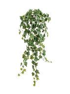 Treez Английский плющ Олд Тэмпл Sensitive Botanic, 90 см, припыленно-зеленый