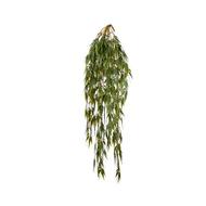 Treez Бамбук ампельный, 60 см