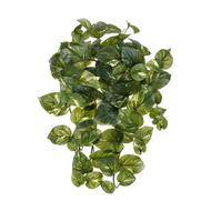 Treez Потос Ауреум ампельный малый Sensitive Botanic, 45 см