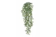 Treez Стегхорн (Оленьи рога) куст ампельный, 70х20 см
