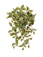 Treez Традесканция ампельная, 40 см, зелено-бело-розовая