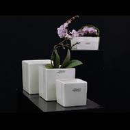 Tiziano Кашпо керамическое Trient Куб, 13.5х13.5х13.5 см, Орхид кремовое