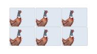 Pimpernel Набор подставок под горячее Забавная фауна.Фазан, 30.5х23 см, 6 шт.