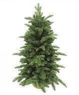 Triumph Tree Ель Нормандия, 60 см, в мешочке, зеленая