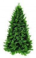 Triumph Tree Ель Царская, 155 см, зеленая