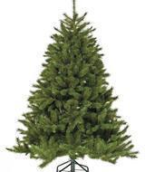 Triumph Tree Ель Лесная Красавица, 185 см, зеленая