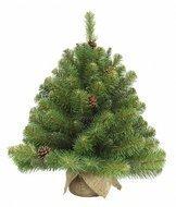 Triumph Tree Ель Императрица с шишками, 60 см, в мешочке, зеленая