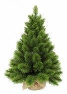 Triumph Tree Сосна Триумф Люкс, 60 см, в мешочке, зеленая