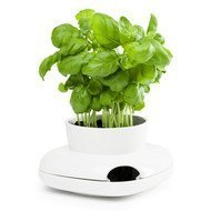 Sagaform Горшок для растений, 13х13х8.6 см, белый