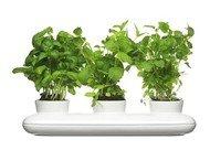 Sagaform Тройной горшок для зелени Herb, 28х13.5х19 см, белый